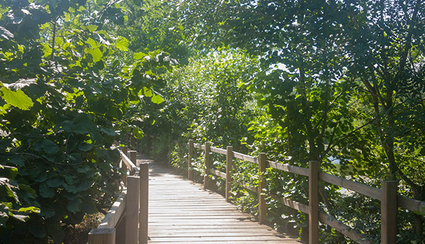 Acarlar-Longozu-Yürüyüş-Parkuru